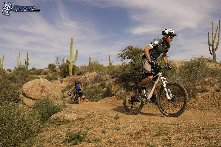 mountainbiking, cactus