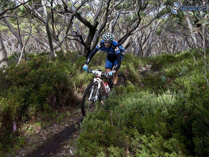 mountainbiking, forêt, arbustes