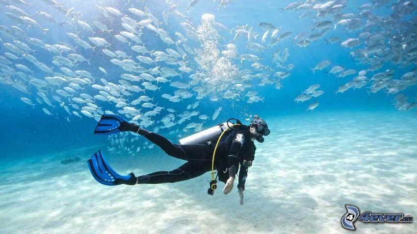 plongeur, troupe de poissons