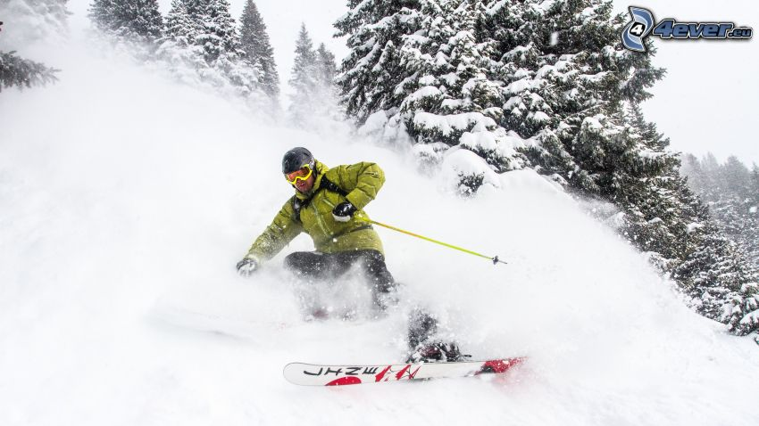 ski, arbres enneigés