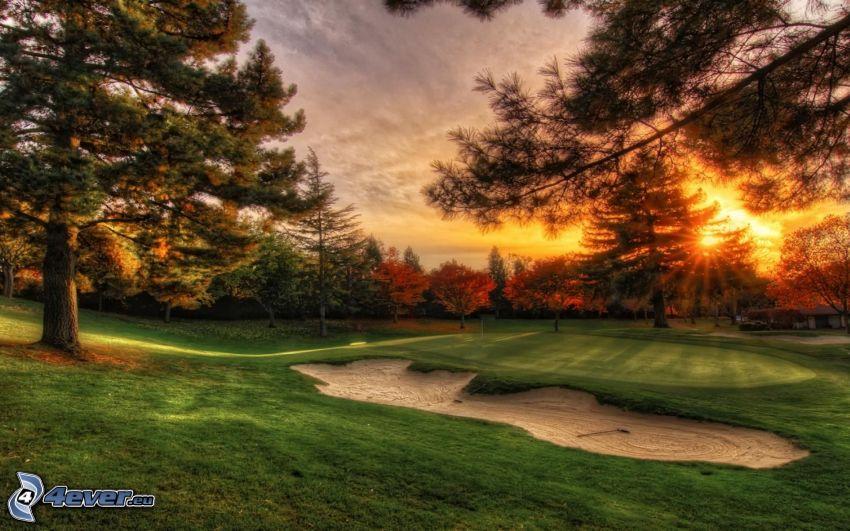 terrain de golf, couchage de soleil derrière un arbre, forêt de conifères