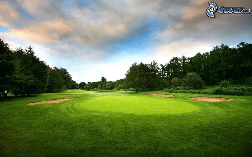 terrain de golf, forêt de conifères