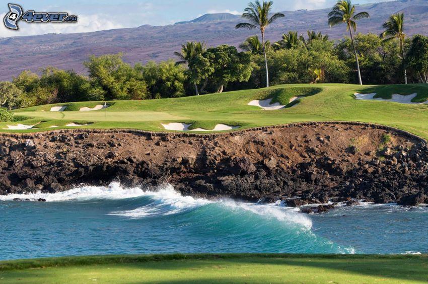 terrain de golf, vagues, palmiers