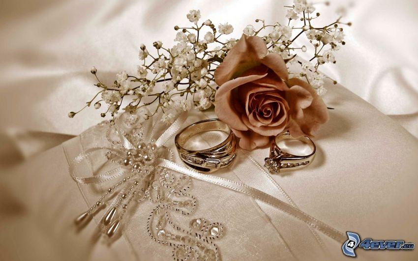 anneaux de mariage, rose, fleurs sèches