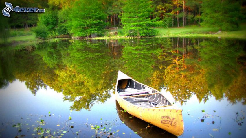 canoë, lac, reflexion, arbres