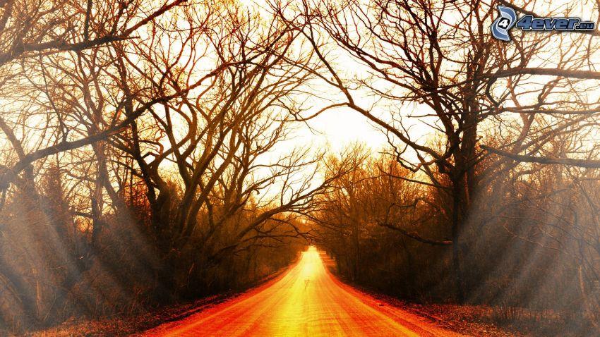 route droite, arbres, rayons du soleil