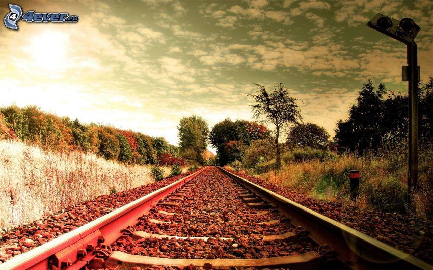 rails, arbres