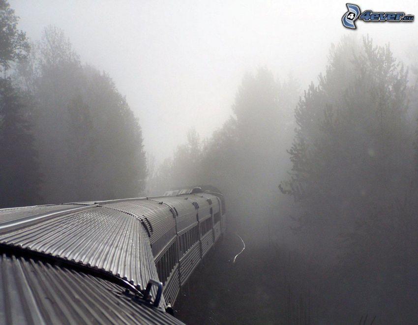 train, brouillard, forêt, Inde