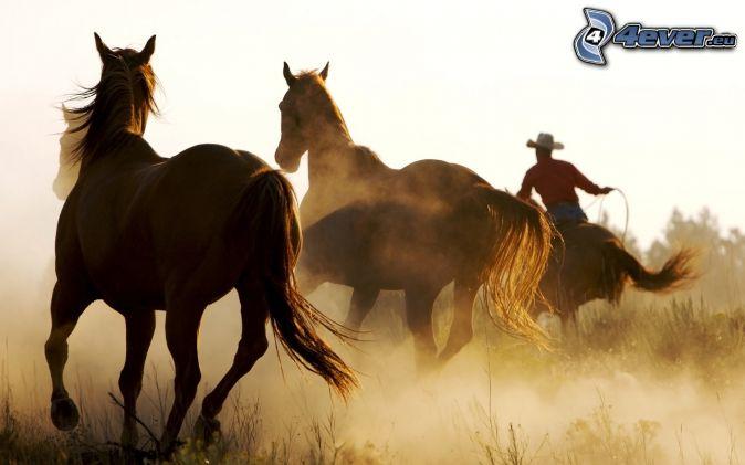 Cavalli , cowboy