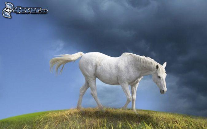 Estremamente Cavallo bianco EH47