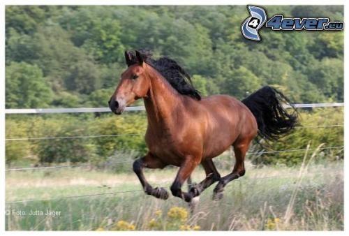 Cavallo in corsa for Giochi di cavalli da corsa