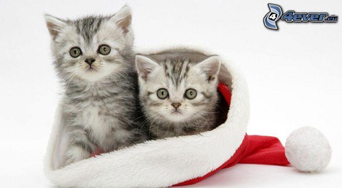 gattini, cappello di babbo natale