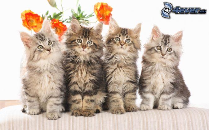 Piccoli gattini for I gattini piccoli