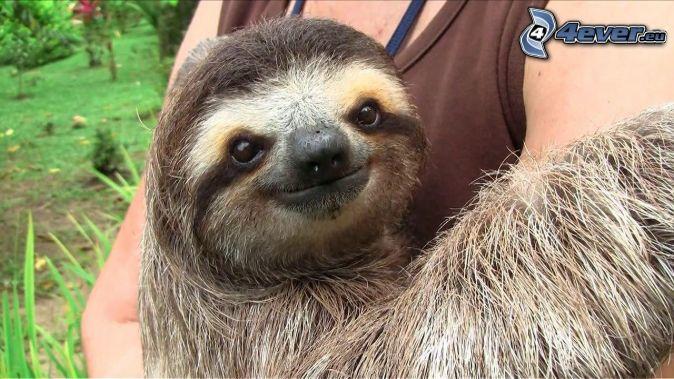bradipo, abbraccio