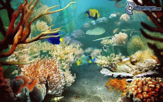 Pesci colorati for Sfondi animati pesci