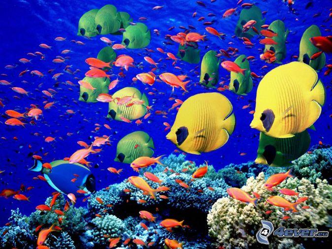Pesci vicino ai coralli for Sfondi animati pesci