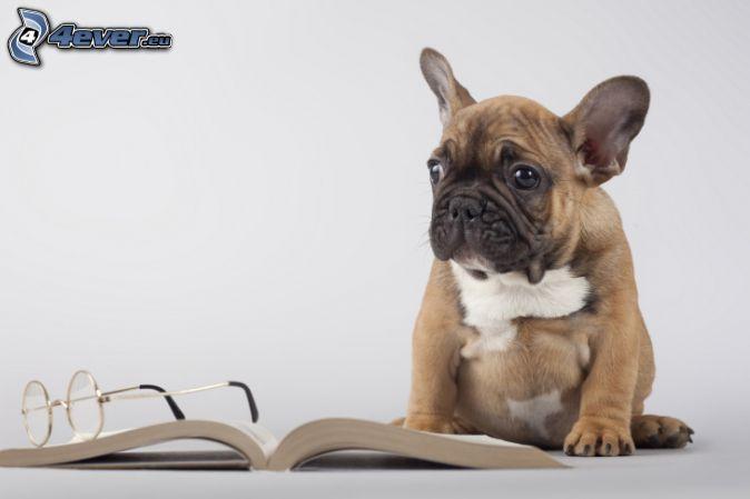 cane, libro, occhiali
