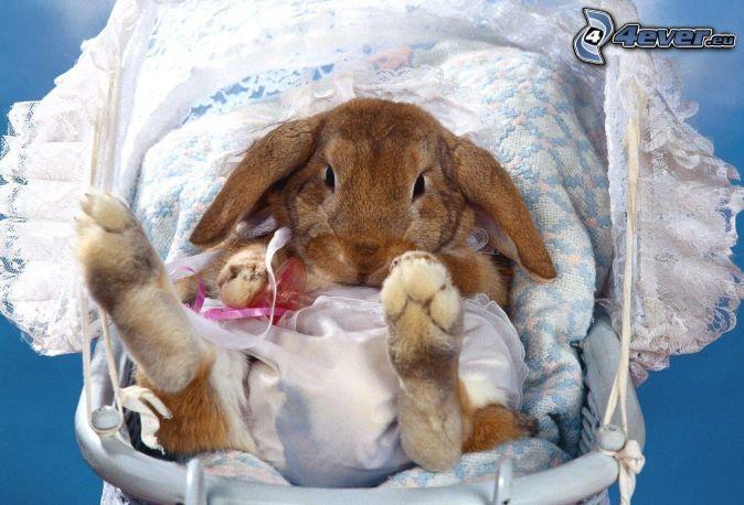 coniglio, bambino