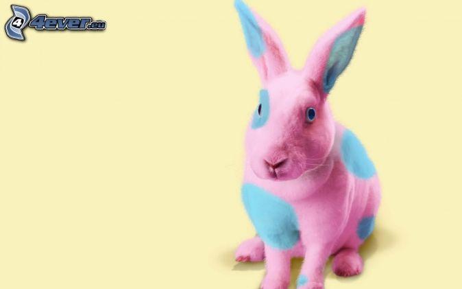 coniglio, colori
