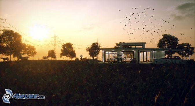 Stormo di uccelli for Casa moderna storm oak