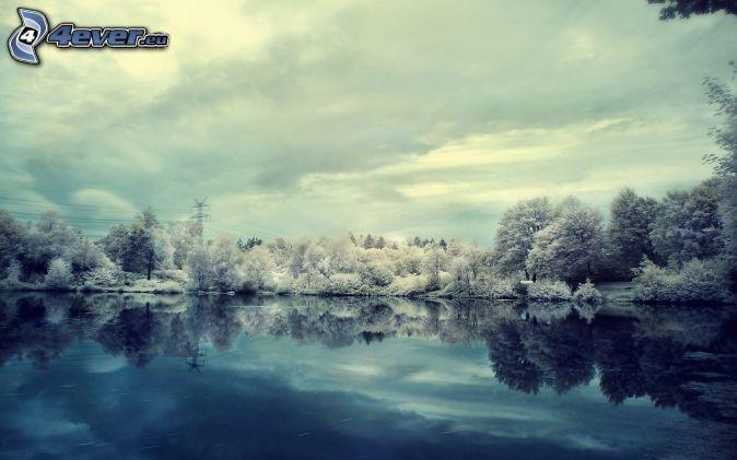 alberi coperti di neve, lago, riflessione