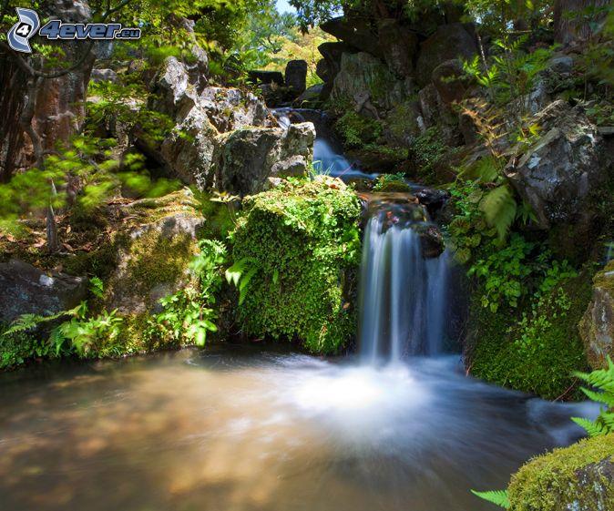 Cascata nella foresta for Cascata per laghetto