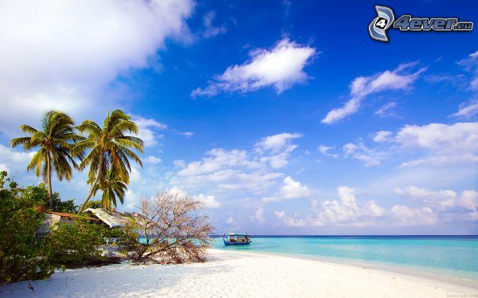 palme sulla spiaggia, costa, mare, nuvole