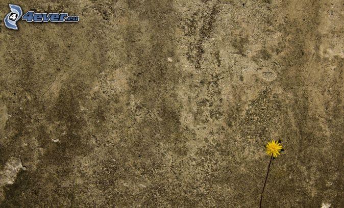 Muro di pietra
