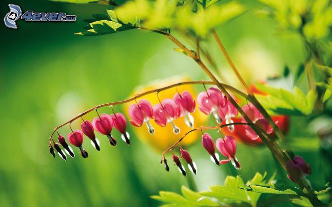 Pianta for Pianta con fiori rossi