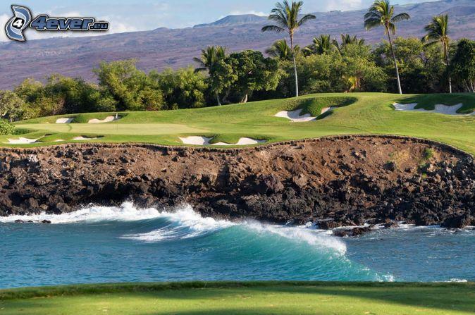 campo da golf, onde, palme