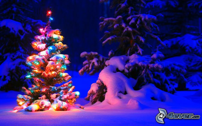 albero di Natale, alberi coperti di neve