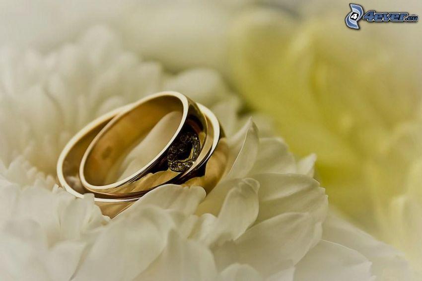 anelli di nozze, petali, matrimonio