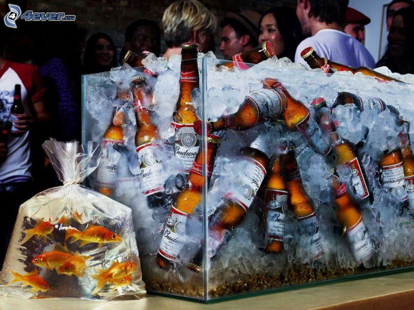 birra fredda, acquario, pesci, ghiaccio