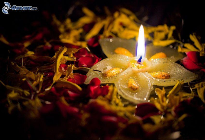 candela, petali di rosa