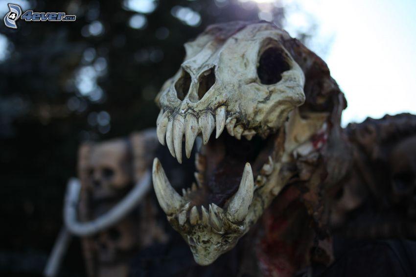 dinosauro, cranio