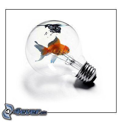 lampadina, acqua, pesce, acquario