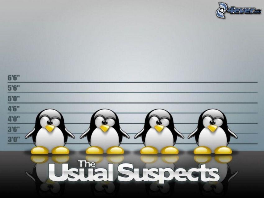Linux, pinguini