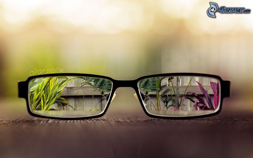 occhiali, piante