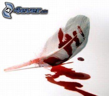 piuma, sangue