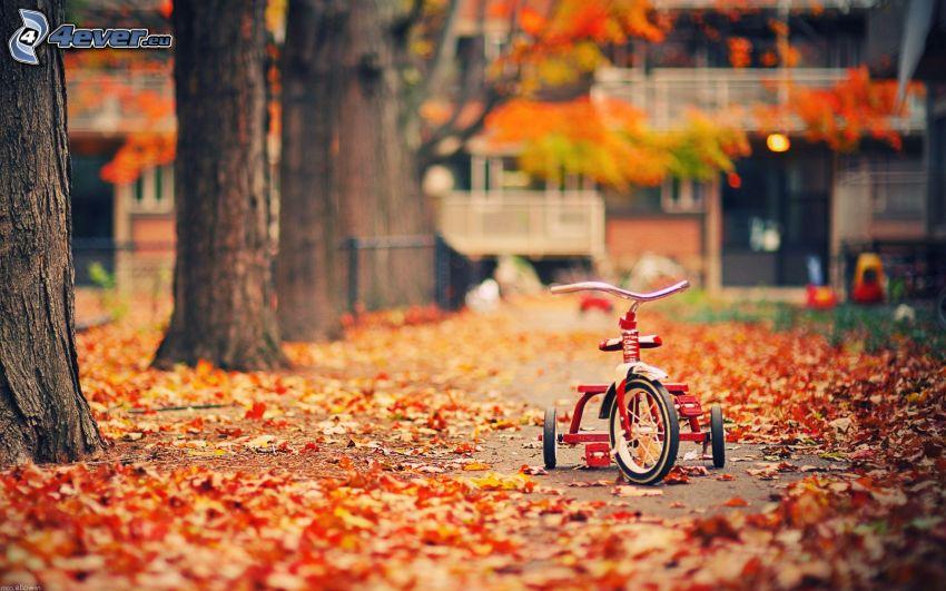 triciclo, viale albero