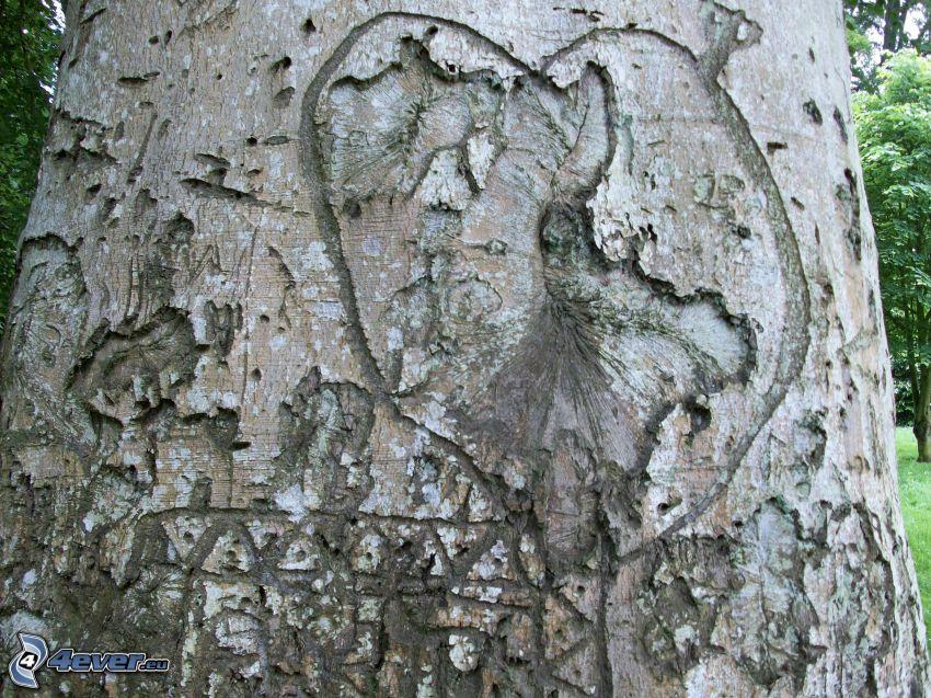 corteccia di albero, cuore, ferite