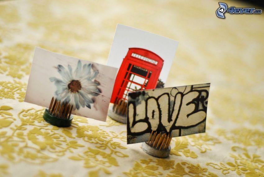 foto, fiore bianco, cabina telefonica, love, graffitismo