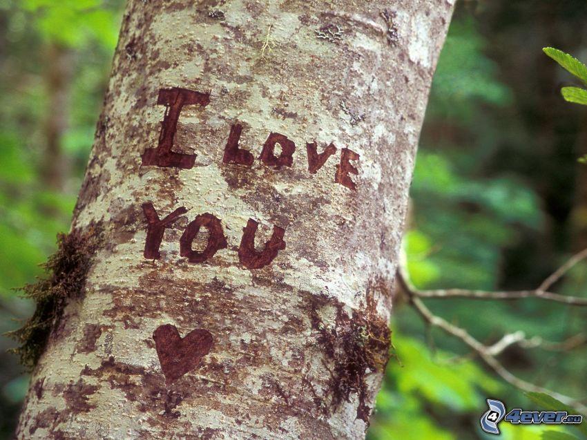 I love you, corteccia di albero, ferite