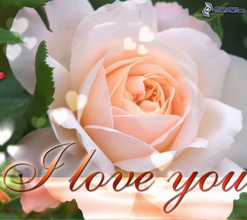I love you, rosa arancione
