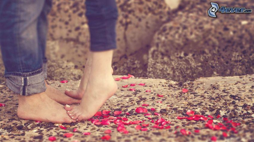coppia, gambe, petali di rosa