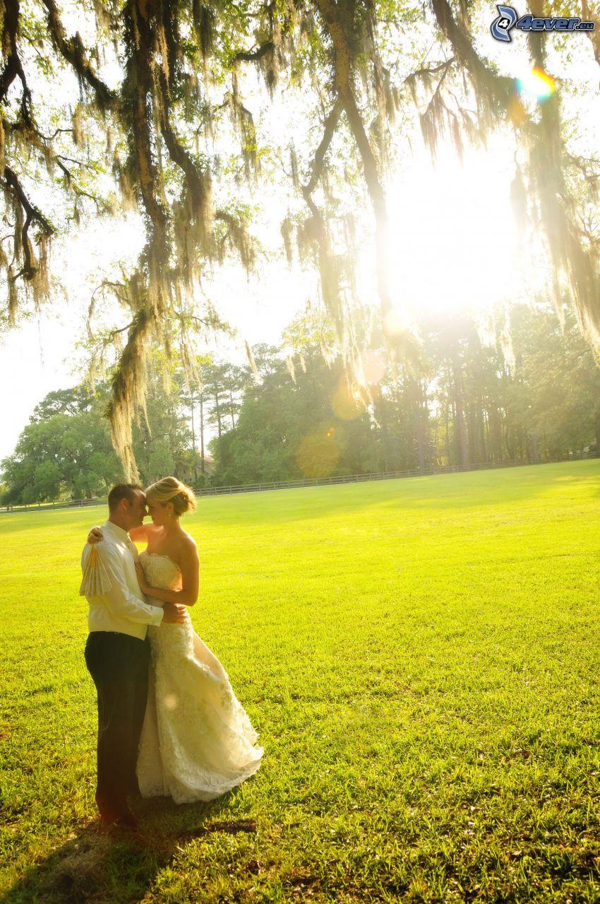coppia sotto l'albero, sposa