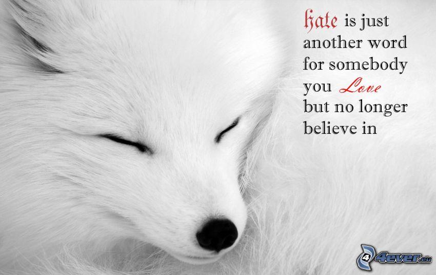 amore, odio, lupo bianco, sonno