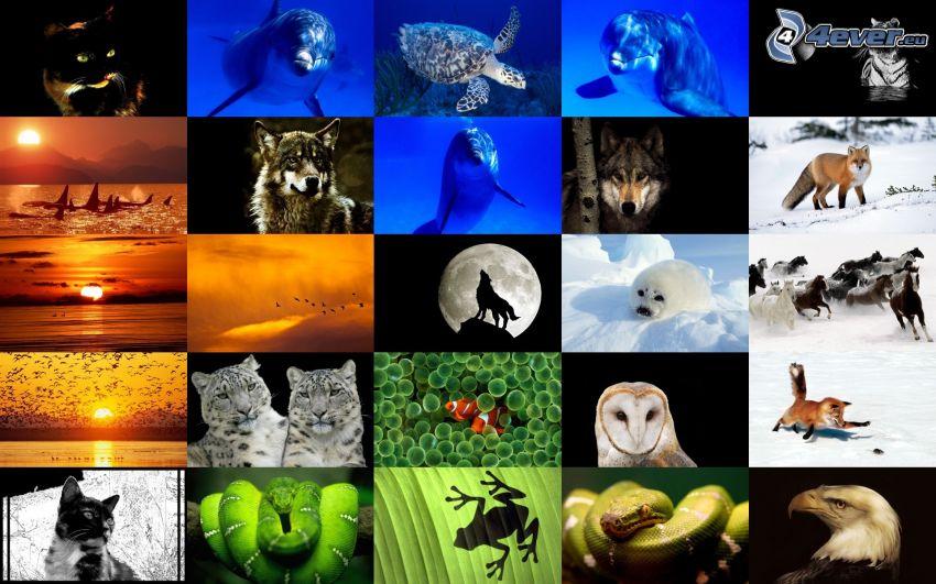 animali, collage