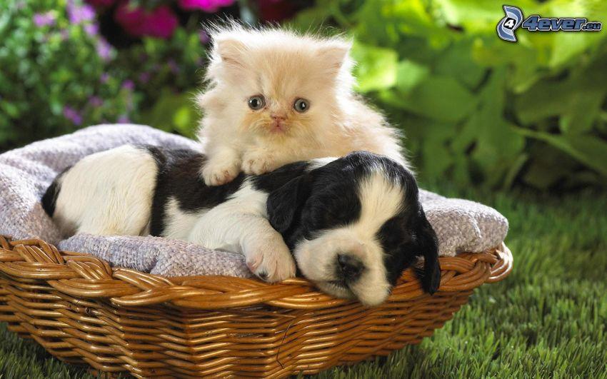cane e gatto, cucciolo, piccolo gattino bianco