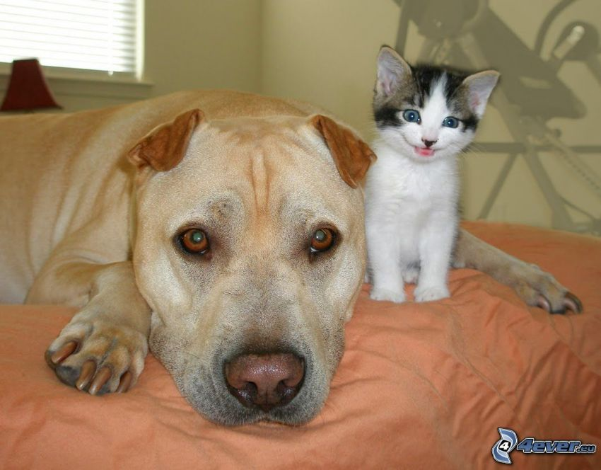 cane e gatto, amici